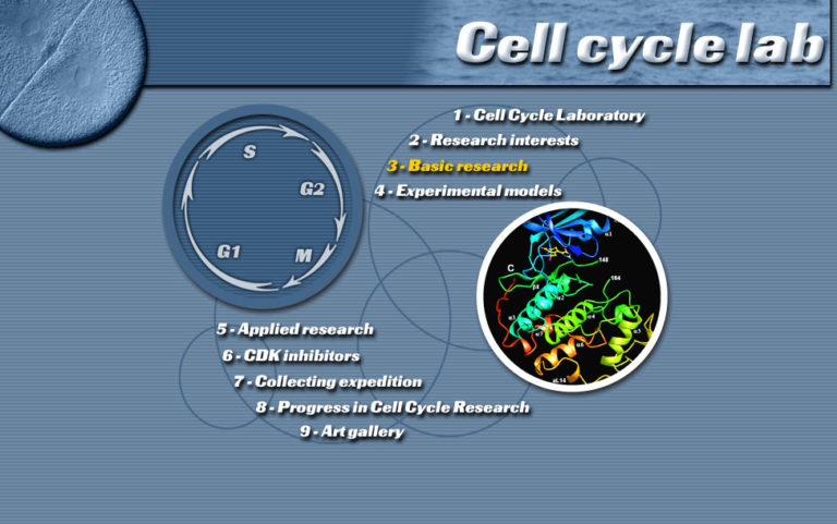Cycle Cellulaire