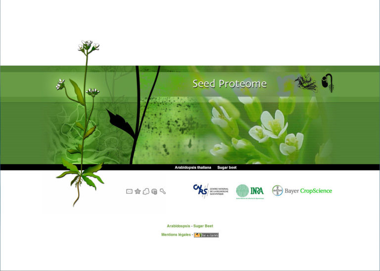 Seed proteome
